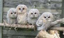 Gloucestershire Information Charities - Oak and Furrows Wildlife Rescue Centre