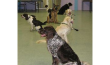Gloucestershire Services Animal Care - Dickson Dog Training