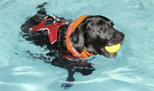 Gloucestershire Services Animal Care - Five Valleys Canine Hydrotherapy Centre