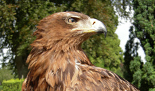 Gloucestershire Places to Visit Family Attractions - International Centre for Birds of Prey