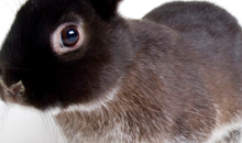 Gloucestershire Shopping Animal Products - Bunny Business Online Petshop