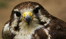 Gloucestershire Places to Visit Farm Parks, Zoos - Cotswold Falconry Centre