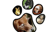 Gloucestershire Services Animal Care - Precious Pets