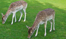 Gloucestershire Places to Visit Farm Parks, Zoos - Prinknash Bird and Deer Park