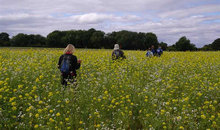 Gloucestershire Leisure Walking Groups - South Cotswold Ramblers